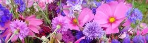 thumbs_beautiful-pink-and-purple-garden-flowers-website-header