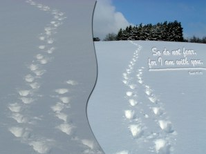 traces_in_the_snow