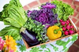 vegetables-garden-harvest-organic